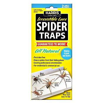 Spider Trap 2 Pack