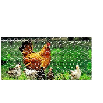 "Poultry Hex Netting 36"" x 150 Ft ~  2"" x 20 Gauge"